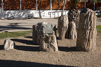 Brannan plaque and petrified tree stumps