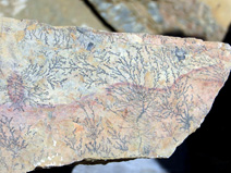 Fine examples of dendrites, pseudofossils that resemble ferns
