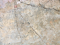 Trilobite fragments in the Carrara Formation
