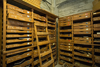 Drawers of fossils in the Campanile