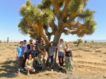 Group photo by a Joshua tree