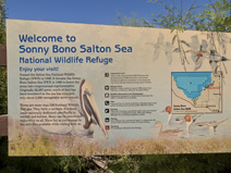 At the Sonny Bono Salton Sea National Wildlife Refuge