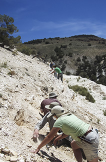 The group spread out along this level in the quarry to look for leaf fossils.