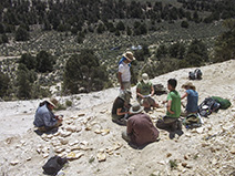 Surrounded by the leaf fossils they collected, the group calculates the mean annual temperature and precipitation for this area 15 million years ago.
