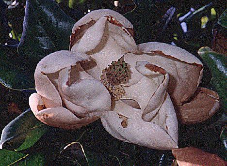 La planta no florece: las posibles causas de las plantas no florecen