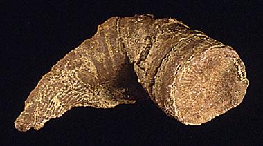 Anthozoa Fossil Record