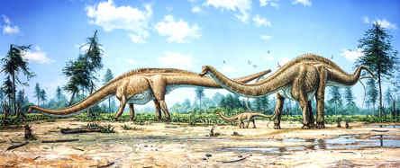 Diplodocus Family
