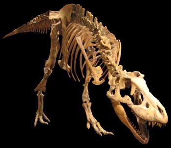http://www.ucmp.berkeley.edu/diapsids/saurischia/tarbosaurus1.jpg