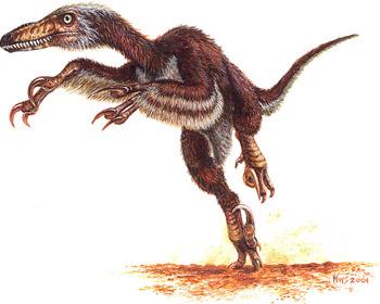 http://www.ucmp.berkeley.edu/diapsids/saurischia/velociraptor1_skrep.jpg
