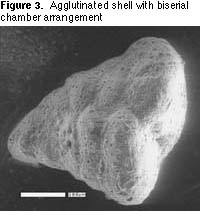 FORAM FACTS - OR AN INTRODUCTION TO FORAMINIFERA