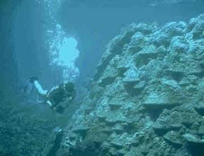 The Aquatic Biome