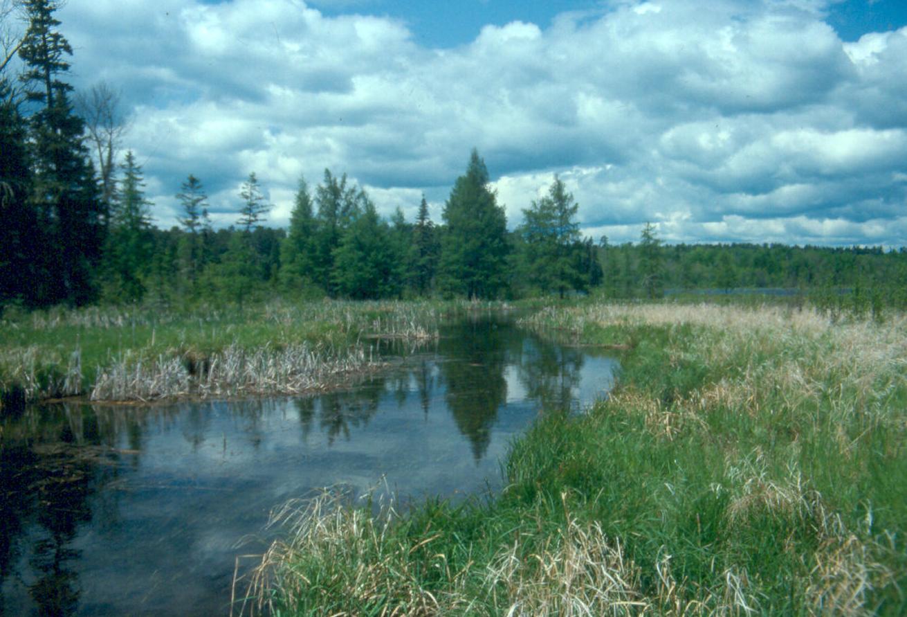 The Wetlands Gallery