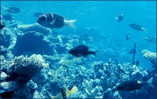 aquatic2.jpg