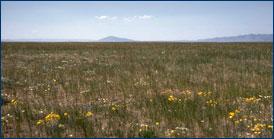 Colorado grassland