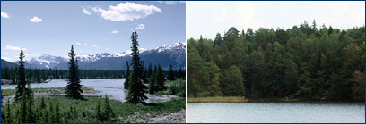 Boreal forest photos