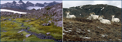 Alpine tundra photos