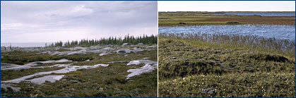 Arctic tundra photos
