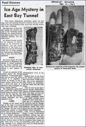 Newspaper article on bones found in the Caldecott, 1963