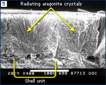 SEM of a recent turtle eggshell