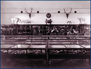 South Hall's Museum of Natural History in 1893
