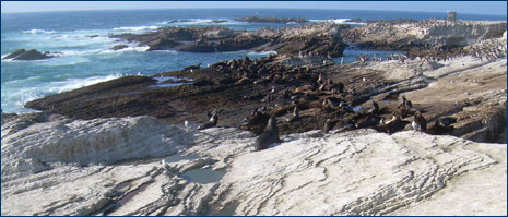 Sea lions and seabirds rest on Monterey Formation exposures around the island