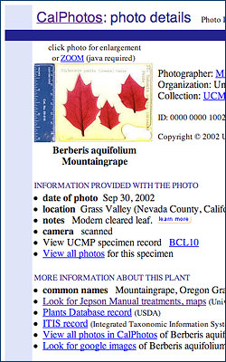 Some of the info available on a cleared leaf in CalPhotos