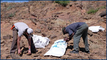 Greg and Tadesse collect samples rich in microvertebrate fossils at JEM VP-5