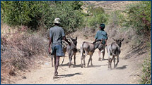 The team engaged these locals and their four donkeys to transport the bags of rock samples