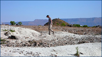 Randy prospects over the bright white volcanic rocks looking for fossil leaves