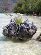 The sand flat on the eastern side of the motu is dotted with chunks of coral rubble