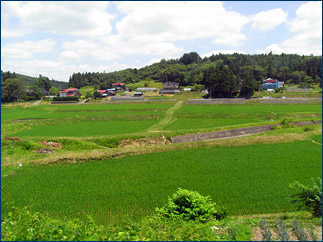 Rice paddies abound on the outskirts of town