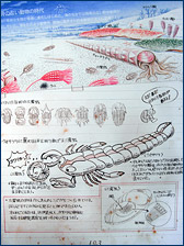 A portion of a timeline at the Museum of Sea and Shells that depicts the evolution of marine life