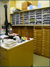 These drawers contain some of the museum's large collection of gastropods