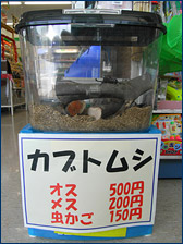Jann found Rhinoceros Beetles, which apparently make good pets, for sale in the local convenience store