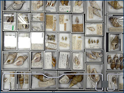 The wonderful contents of a single drawer at the Shell Museum