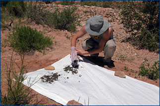 The remaining sand and fossils are spread across a white bedsheet to dry