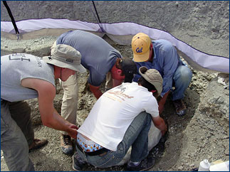 The entire group helps to flip the very heavy plaster jacket