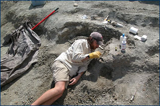 Alan Turner excavating another bone
