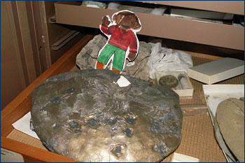 With ammonite fossil bitten by a mosasaur