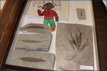 With leaf fossils