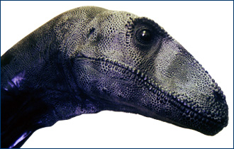 Deinonychus head