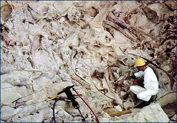 A worker at Dinosaur National Monument excavates bones