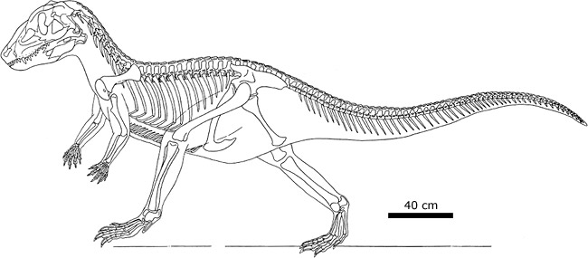 Skeletal reconstruction of Postosuchus