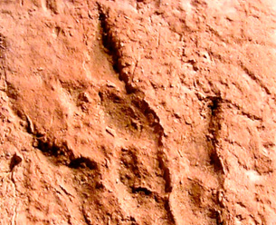 Early encounters with fossil footprints