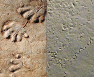 Fossil tracks and trails
