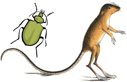 Beetle and jumping mouse