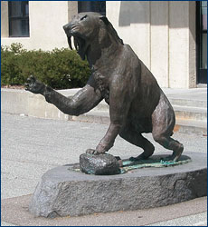 The saber-toothed cat sculpture outside McCone Hall