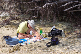 On a Bermuda beach, a wave-battered Erin Meyer examines specimens of <i>Cittarium pica</i> that she's collected