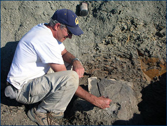 In the Hell Creek Formation of Montana, Mark Goodwin exposes a juvenile <i>Triceratops</i> parietal, the center bone that makes up the frill on these horned dinosaurs