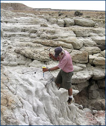 Howard Hutchison working on removing the pelvis of an approximately 52-million-year-old mammal, <i>Coryphodon</i>, from a sandstone in the Willwood Formation of the Bighorn Basin of Wyoming